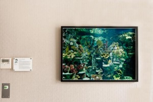 Installation view: Max McClure- Nuffield Health Photography Bursary in partnership with Willis Newson.
